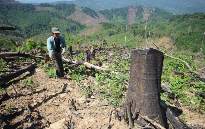 rare-forests-being-axed-under-authorities-noses-in-central-vietnam-1