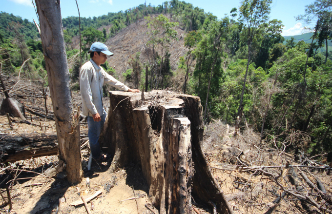 rare-forests-being-axed-under-authorities-noses-in-central-vietnam-2
