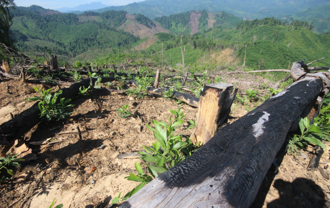 rare-forests-being-axed-under-authorities-noses-in-central-vietnam-5