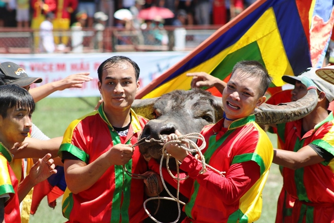 despite-controversy-buffalo-fighting-festival-resumes-in-northern-vietnam-7