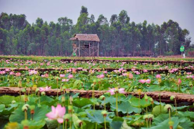 float-away-on-a-lotus-leaf-at-this-pagoda-in-southern-vietnam-8