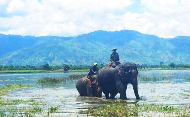 Stillbirth of baby elephant crushes Vietnam's 30-year hopes of reviving domesticated herd