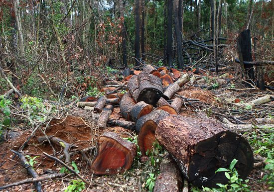Military exercises destroy vast swathes of forest in central Vietnam