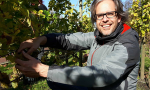 From grape to table, Dutch community toasts urban vines
