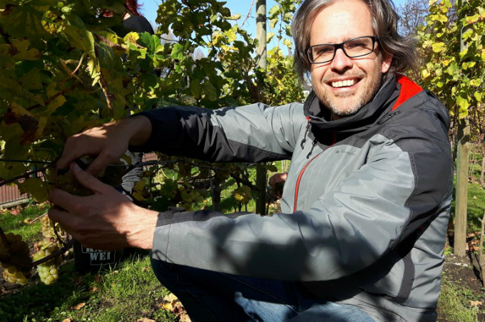 Tycho Vermeulen, founder of De Haagse Stadswijngaard (or The Hague Urban Vineyard), poses in a vineyard as he harvests grapes of Johanniter, on October 21, 2017, in The Hague. Photo by AFP/Sophie Mignon