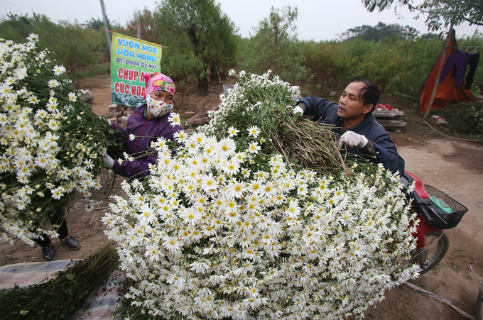 winter-wonderland-daisy-season-brightens-spirits-in-hanoi-7