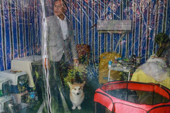 pooches-on-parade-at-vietnam-championship-dog-show-9
