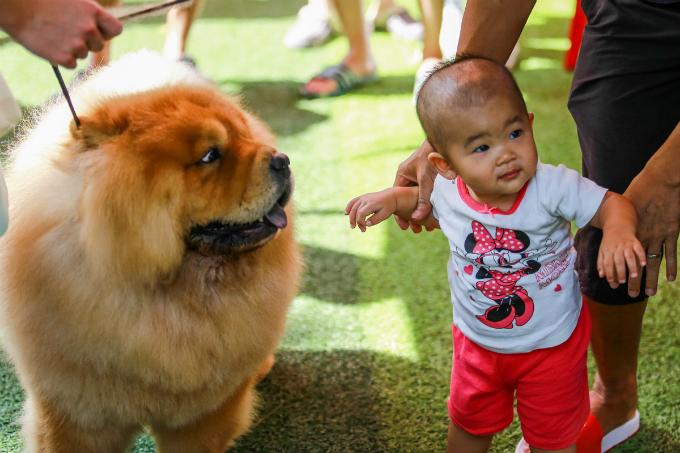 pooches-on-parade-at-vietnam-championship-dog-show-2