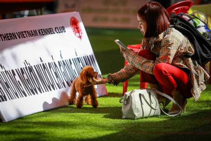 pooches-on-parade-at-vietnam-championship-dog-show-4