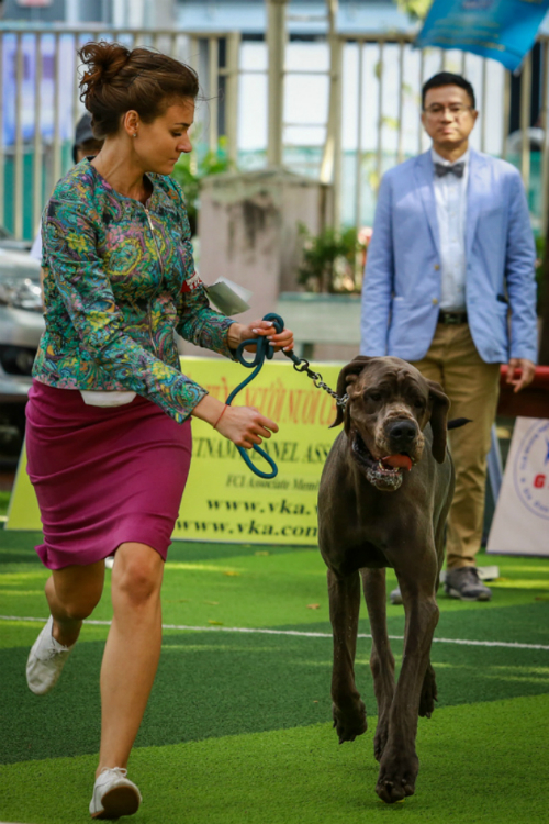 pooches-on-parade-at-vietnam-championship-dog-show-5