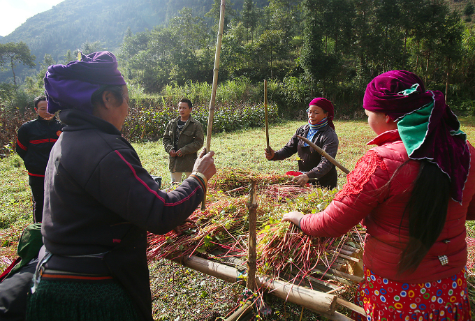 Mong ethnic people in Ha Giang Province harvest the crops using simple handmade tools.