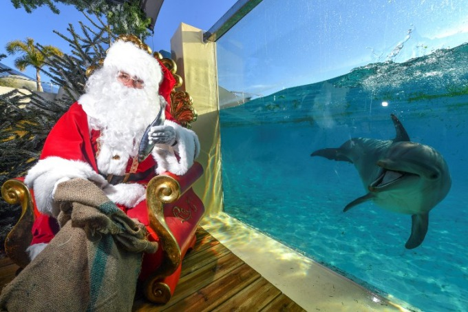A man dressed as Santa Claus poses with a dolphin on December 22, 2017 at the theme park of Marineland in Antibes, southeastern France. Photo by AFP/Yann Coatsaliou