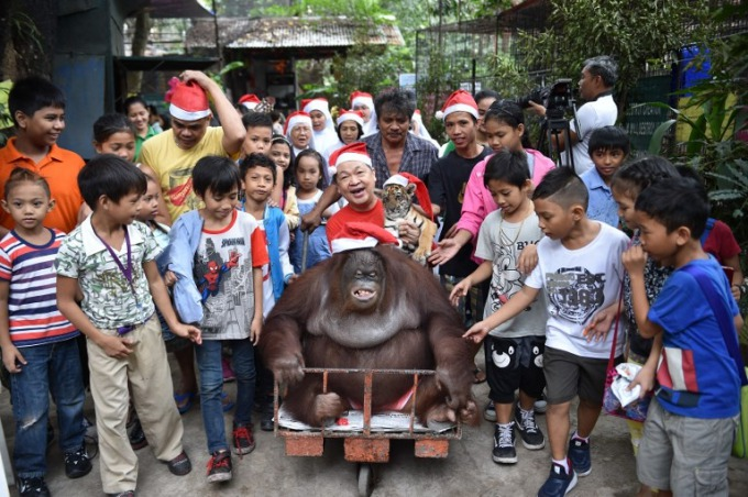 Zoo owner Manny Tangco (C-in red shirt) sits next to an oranggutan and a Bengal tiger cub wearing a Santa hat during a Christmas party for children visiting from an orphanage at a zoo in Malabon, suburban Manila on December 21, 2017. Photo by AFP/Ted Aljibe