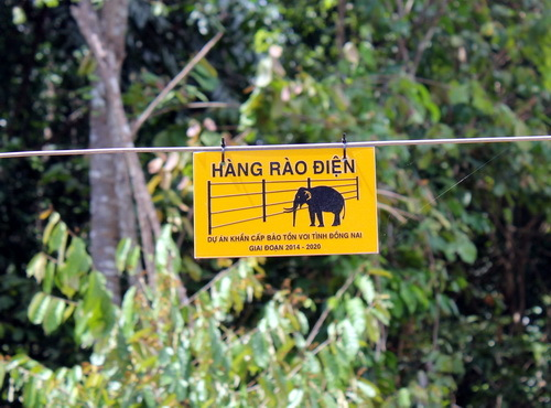 Clash with humans feared as wild elephants forage for food in southern Vietnam