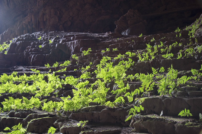 Sunbeams go deep into the cave, allowing the growth of ferns. Pygmy is a neighbor of Son Doong and En, the worlds biggest and third biggest cave that have gained lots of international fame in recent years.