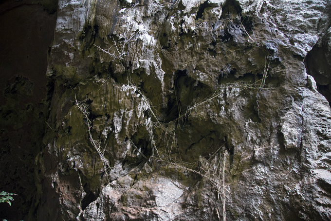 At the back of the cave, tourists can spot many ropes and bamboo ladders that were set up by locals in the past to get birds nests and honey. These activities have been prohibited in lines with updated regulations on forest protection. It was local people that discoverred Pygmy in 1997 before it is properly explored by the British Cave Research Association later.