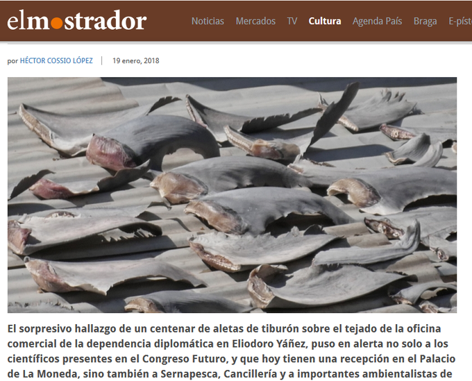 Vietnam investigating reports of shark fins being dried on embassy roof in Chile