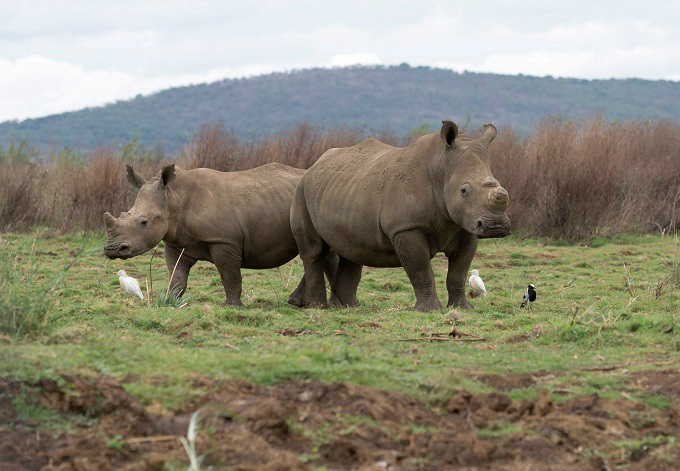 Rhino poaching down in Kruger but up elsewhere