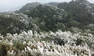It's snow time: Cold front descends on northern Vietnam