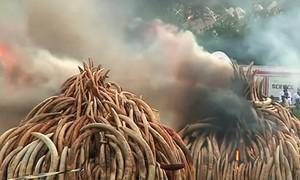 Leading ivory trade investigator found dead in Kenya