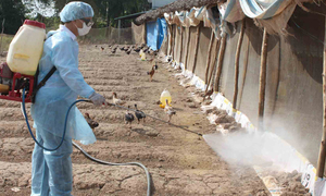 Vietnam issues bird flu warning after latest human case reported in China