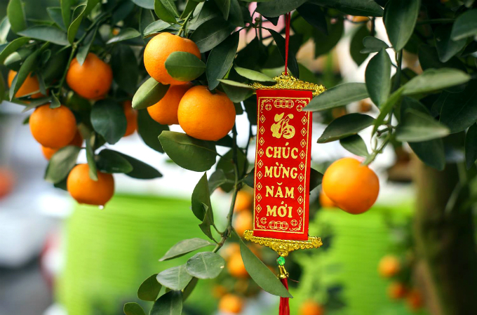 Happy New Year read this tag on the kumquat tree. Photo by VnExpress/Quynh Tran