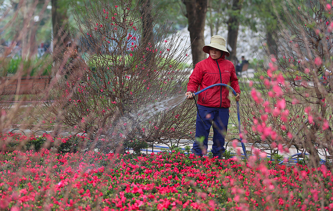 A garden of peach blossoms and other flowers on Dinh Tien Hoang Street in Hanoi receives extra  care these days.