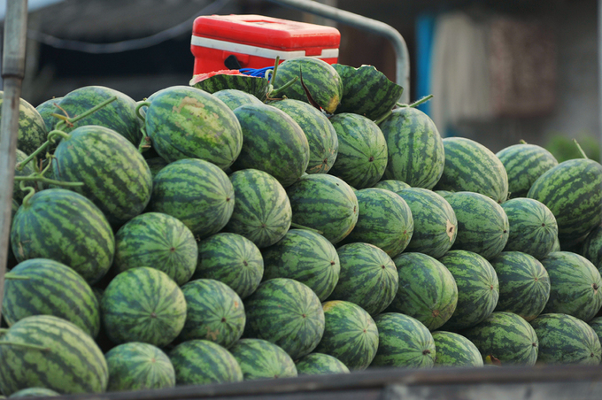A boat is full of watermelons. The fruit is much more common now than it was couple decades ago, but is still one that most families want to have for the altar on the holiday. It is associated with a legend story in which a Vietnamese family on a deserted island received birds help to plant watermelons and survived for years just by eating them.