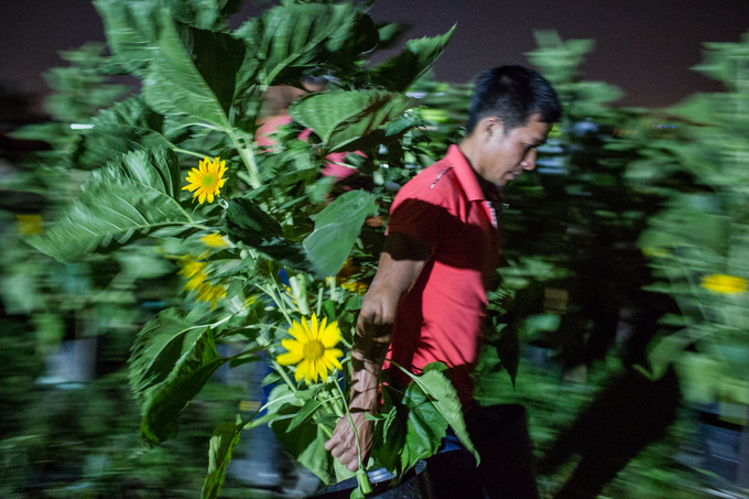 Nguyen Viet Duc from the Central Highlands carries two pots of sunflowers to a truck at midnight. I grow coffee and pepper back in my hometown. This is the first time I come to Saigon to work to take care of flowers. Its nice here as most people are easy to get along with. t <!--  /* Font Definitions */ @font-face  {font-family:MS 明朝;  mso-font-charset:78;  mso-generic-font-family:auto;  mso-font-pitch:variable;  mso-font-signature:1 134676480 16 0 131072 0;} @font-face  {font-family:MS 明朝;  mso-font-charset:78;  mso-generic-font-family:auto;  mso-font-pitch:variable;  mso-font-signature:1 134676480 16 0 131072 0;} @font-face  {font-family:Cambria;  panose-1:2 4 5 3 5 4 6 3 2 4;  mso-font-charset:0;  mso-generic-font-family:auto;  mso-font-pitch:variable;  mso-font-signature:-536870145 1073743103 0 0 415 0;}  /* Style Definitions */ p.MsoNormal, li.MsoNormal, div.MsoNormal  {mso-style-unhide:no;  mso-style-qformat:yes;  mso-style-parent:;  margin:0in;  margin-bottom:.0001pt;  mso-pagination:widow-orphan;  font-size:12.0pt;  font-family:Cambria;  mso-ascii-font-family:Cambria;  mso-ascii-theme-font:minor-latin;  mso-fareast-font-family:MS 明朝;  mso-fareast-theme-font:minor-fareast;  mso-hansi-font-family:Cambria;  mso-hansi-theme-font:minor-latin;  mso-bidi-font-family:Times New Roman;  mso-bidi-theme-font:minor-bidi;} span.5yl5  {mso-style-name:_5yl5;  mso-style-unhide:no;} .MsoChpDefault  {mso-style-type:export-only;  mso-default-props:yes;  font-family:Cambria;  mso-ascii-font-family:Cambria;  mso-ascii-theme-font:minor-latin;  mso-fareast-font-family:MS 明朝;  mso-fareast-theme-font:minor-fareast;  mso-hansi-font-family:Cambria;  mso-hansi-theme-font:minor-latin;  mso-bidi-font-family:Times New Roman;  mso-bidi-theme-font:minor-bidi;} @page WordSection1  {size:8.5in 11.0in;  margin:1.0in 1.25in 1.0in 1.25in;  mso-header-margin:.5in;  mso-footer-margin:.5in;  mso-paper-source:0;} div.WordSection1  {page:WordSection1;} -->