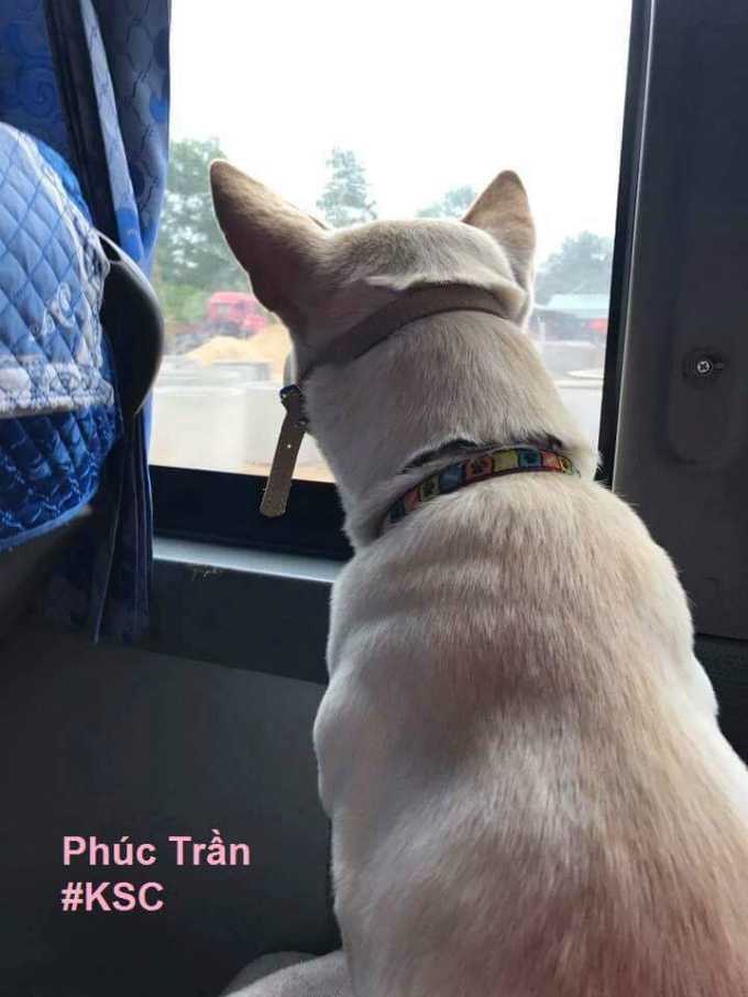 A dog on a bus. Sight-seeing.