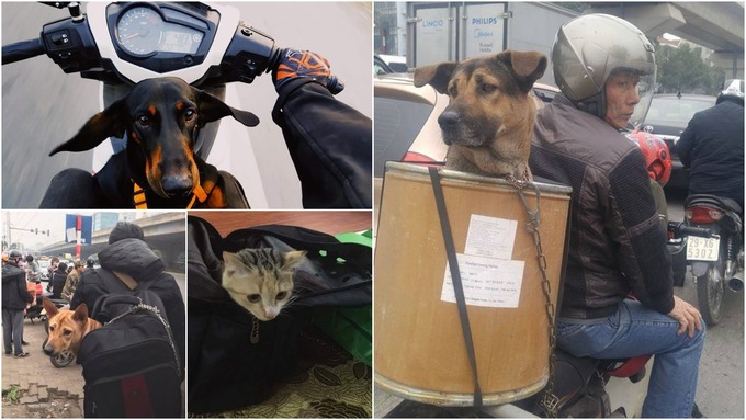 dogs-in-bags-and-boxes-vietnamese-pet-owners-solve-long-holiday-headache-in-hilarious-ways