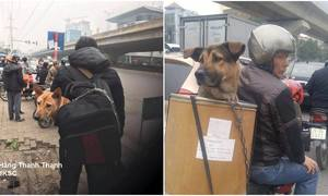 Dogs in bags and boxes: Vietnamese pet owners solve long holiday headache in hilarious ways