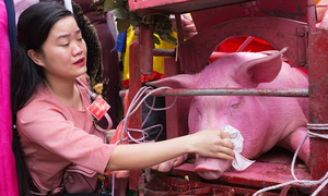 Vietnam's controversial pig slaughtering festival returns behind closed doors