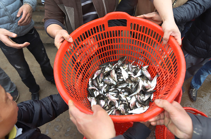 The released fish came from a supplier recommended by the Directorate of Fisheries and include climbing perch, mud carp, common carp and catfish.