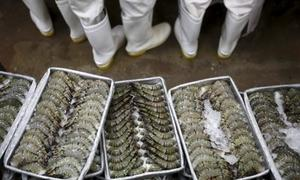 Vietnam fights US anti-dumping tariff on shrimp exports