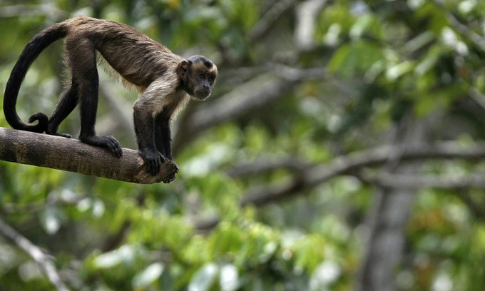 Warming could threaten half of species in 33 key areas: report