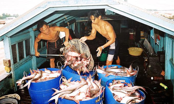 Record high tariffs threaten Vietnam's pangasius exports to US