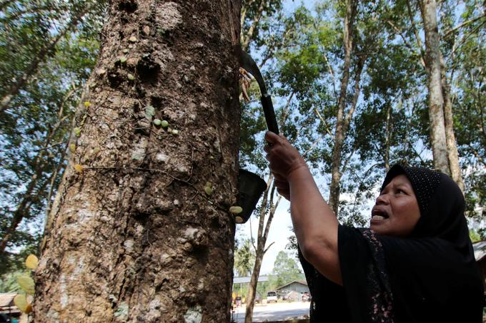 Carbon prices too low to protect SE Asian forests from rubber expansion: report