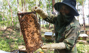 Follow the flowers: On the hunt with nomadic beekeepers in Vietnam