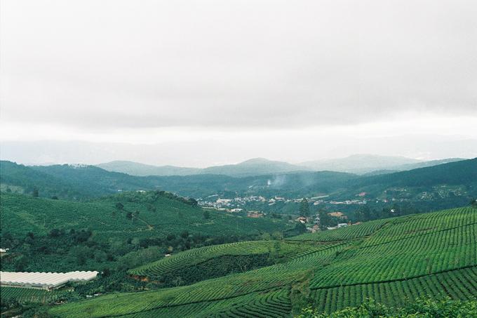Cau Dat tea plantation outside Da Lat. Photo by VnExpress/Phong Vinh