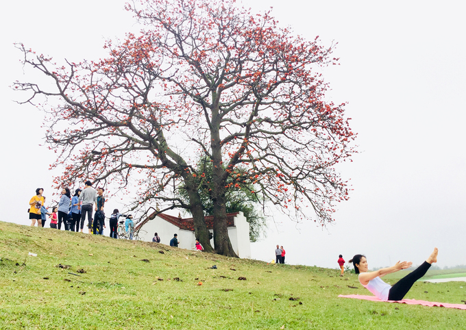 This spectacular red cotton tree outside Mieu Ba Co in the northen province of Bac Giang is so famous it gets listed as a popular destination on Google Map.