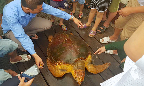 Vietnamese fisherman refuses cash offer, releases rare turtle back to sea