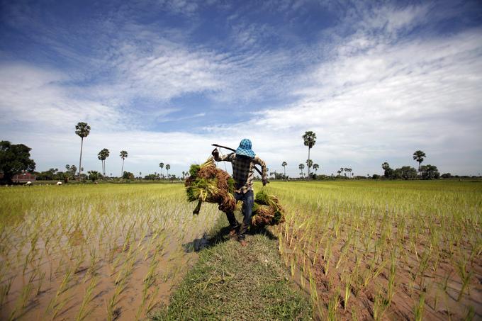 Cambodian farmers sue Thai sugar group Mitr Phol over alleged land grab