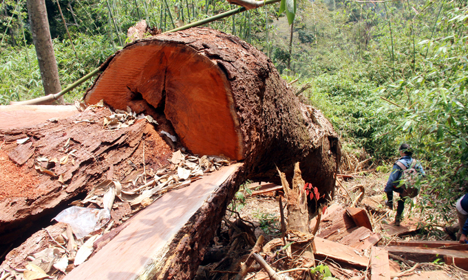 Six Vietnamese forest rangers suspended over series of illegal logging cases