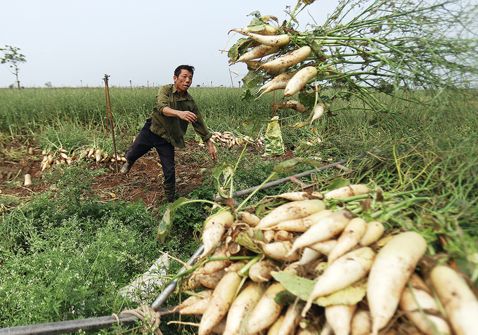 Vietnamese farmers should study market demand to avoid oversupply, losses: PM