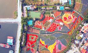 Shining bright: Flower fields blossom in heart of Vietnam's capital
