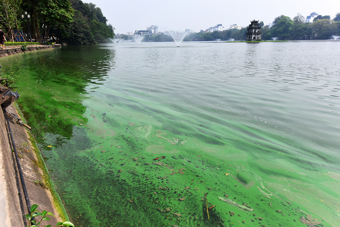 Toxic algae poses threat to Hanoi's iconic Sword Lake