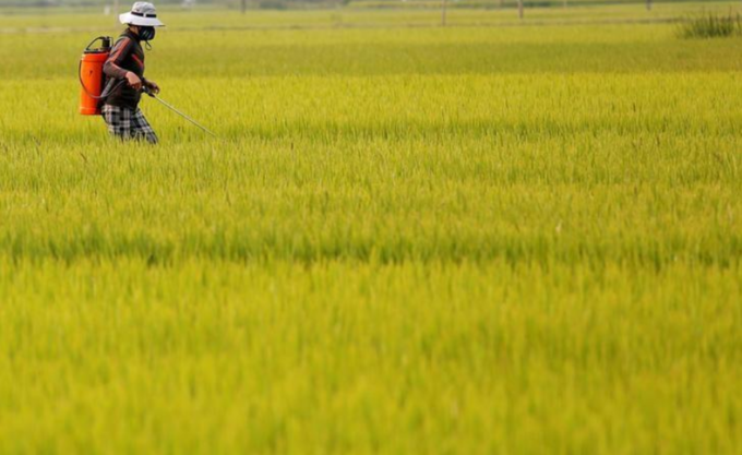 Vietnam rice rates up for fifth week; currency moves weigh on India, Thailand