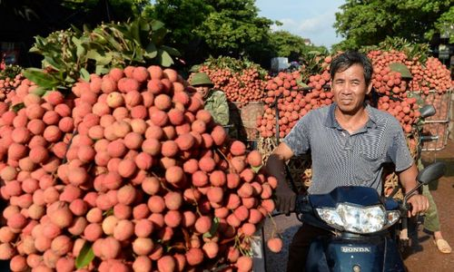High air freight costs hinder Vietnamese fruit exports