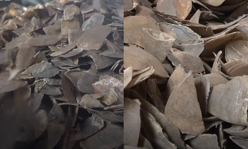 Tons of pangolin scales seized at Ho Chi Minh City port